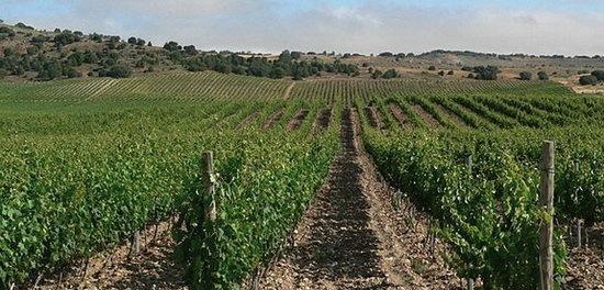 Ribera_del_Duero_Landschaft.jpg